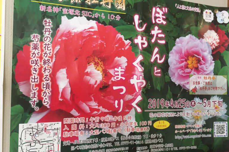 長谷牡丹園のぼたんとしゃくやくまつりポスター