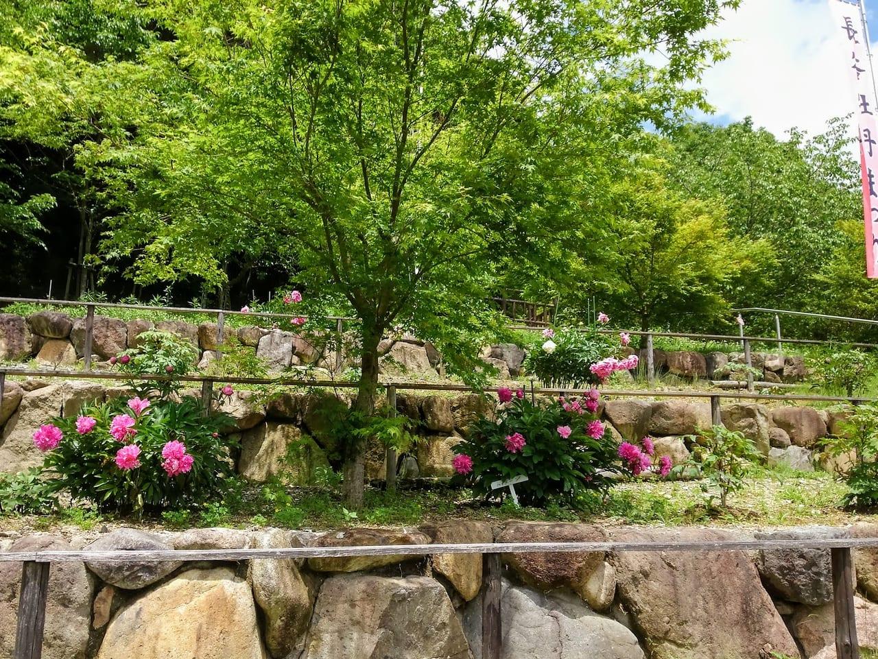 長谷牡丹園